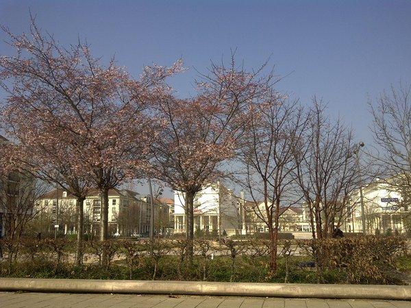 Sakura_bussystgeorges